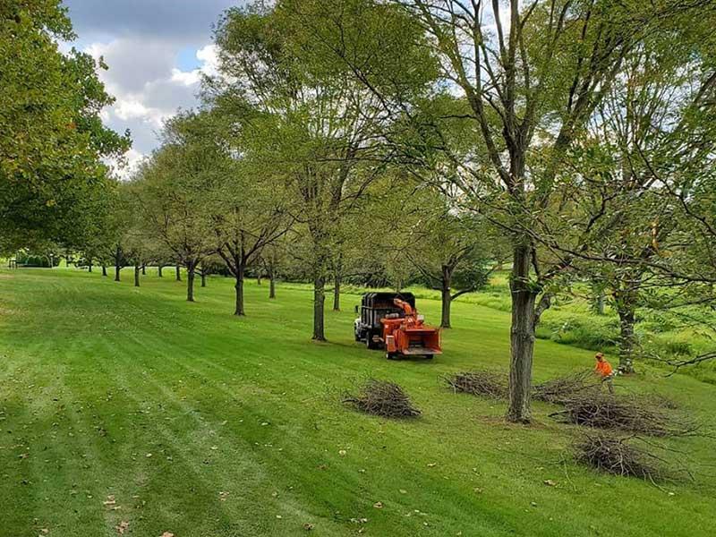 Tree Service Hamilton NJ